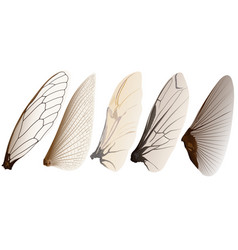 Insect wings vector