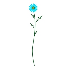 Light Blue Daisy Blossom on White Background vector image