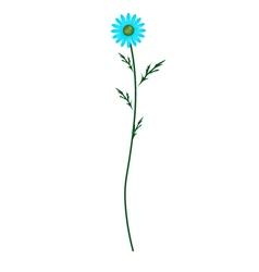 Light Blue Daisy Blossom on White Background vector