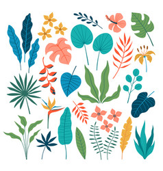 set flat tropical floral design elements vector image