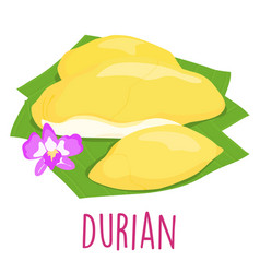 durian thai popular fruit white background vector image