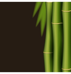 Bamboo design template vector image