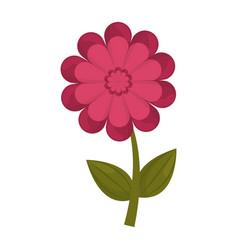 gerbera flower stem leaves vector image