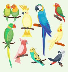 cartoon exotic parrots set vector image