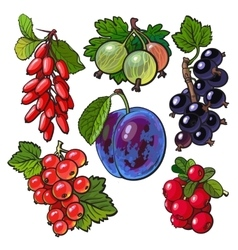 Garden berries - red black currant gooseberry vector image