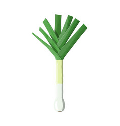 ripe vegetable bitter onion with green stem vector image