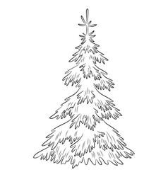 christmas fir tree contours vector image vector image