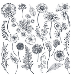 collection of hand drawn flowers and plants vector image vector image