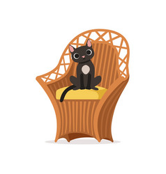 lovely black cat sitting on a wicker chair vector image