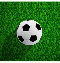 ball on the grass vector image
