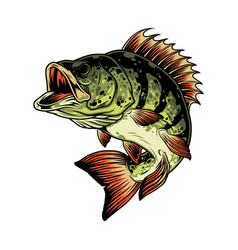 colorful angry perch fish template vector image