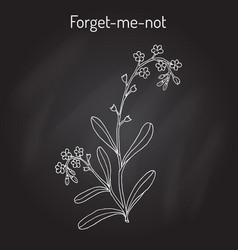 forget-me-not myosotis arvensis vector image