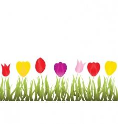 Tulips garden vector