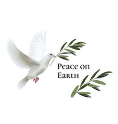 white dove peace flying vector image