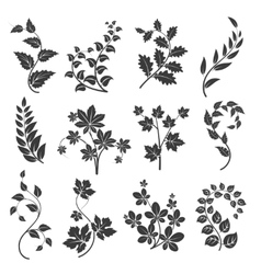 Curly branches silhouettes with leaves vector image