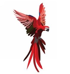 Colorful Red flying parrot vector