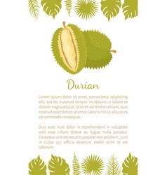 durian exotic juicy fruit unusual flavour and text vector image