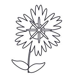 magnolia flower natural outline vector image