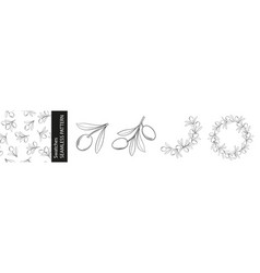set of different branches of olives seamless vector image