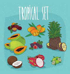 Set of isolated organic tropical fruit cliparts vector