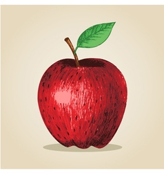 Sketch of an apple vector image