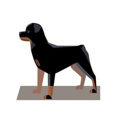 rottweiler minimalist image vector image vector image