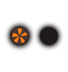 Black sea urchin vector