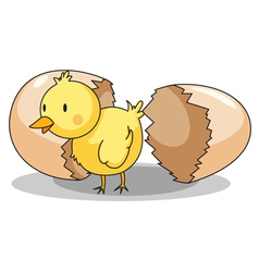 Chick hatching vector image
