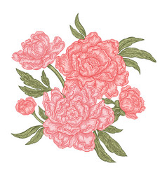 hand drawn peony flowers isolated on white vector image vector image