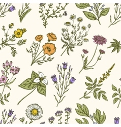 Wild flowers and herbs Seamless floral pattern vector image