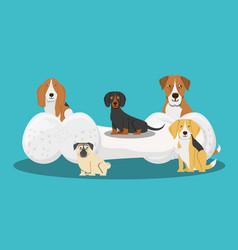 Cute dogs design vector