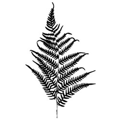 Fern silhouette isolated on white background vector