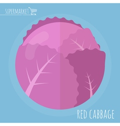 Flat design red cabbage vector