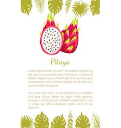pitaya pitahaya exotic juicy fruit isolated vector image