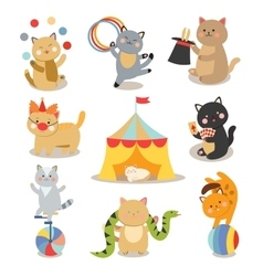 Set of cheerful circus playing cats vector image vector image
