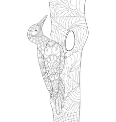 Woodpecker coloring for adults vector image vector image