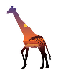 african zebra silhouette template vector image