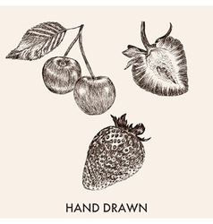 Sketch strawberry and cherry Hand drawn Fruit vector image vector image