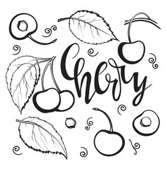 cherry set linear drawing vector image