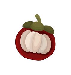 Flat icon of half mangosteen ripe fruit of vector