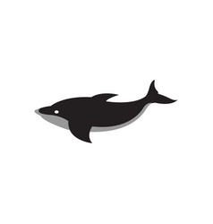 whale graphic design template isolated vector image