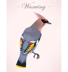 Cedar waxwing vector