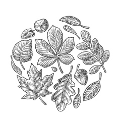 Set leaf vintage engraved vector