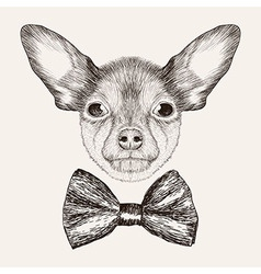 Sketch Toy Terrier with bow tie Hand drawn dog vector