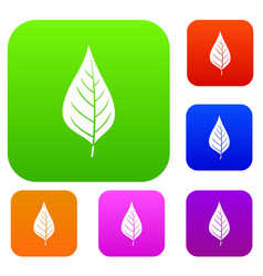 apple tree leaf set color collection vector image