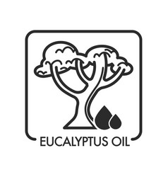 Eucalyptus oil drops and tree with branches an vector