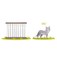 grey wolf vector image