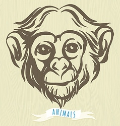 Hand drawn portrait of monkey chimpanzee vector