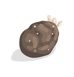 Sprouted potato on a white vector