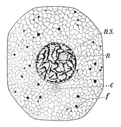 Typical amimal cell vintage vector
